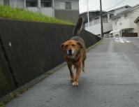 散歩20120621-3