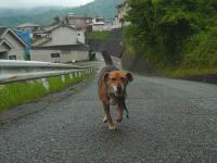 散歩20120621-4