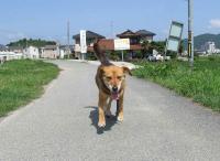 散歩20120622-2