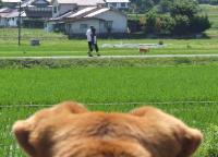 散歩20120622-3