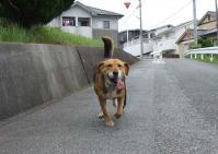 散歩20120623-3