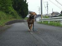 散歩20120624-2