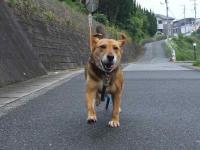 散歩20120624-3