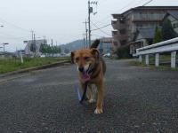 散歩20120624-5b