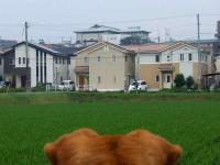 散歩20120624-5