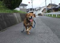 散歩20120625-1