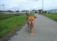 散歩20120625-3