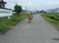 散歩20120625-4