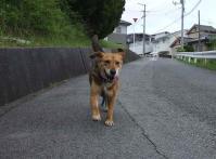散歩20120626-2