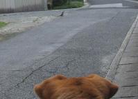 散歩20120626-3