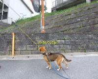 散歩20120626-4