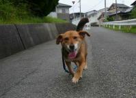散歩20120627-1