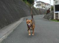 散歩20120627-2