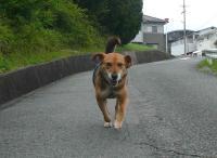 散歩20120628-2