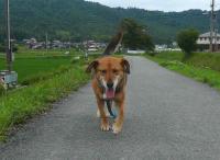散歩20120628-4