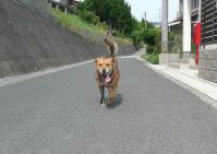 散歩20120629-2