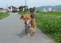 散歩20120629-4