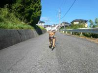 散歩20120826-1