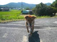 散歩20120826-2