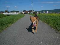 散歩20120826-3