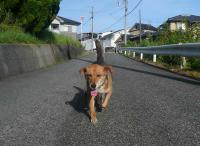 散歩20120827-1