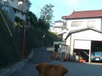 散歩20120827-2