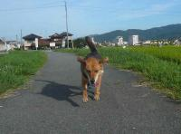 散歩20120827-3