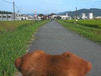 散歩20120827-4