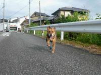 散歩20120828-1