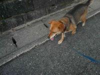 散歩20120828-2
