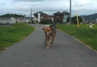 散歩20120828-4