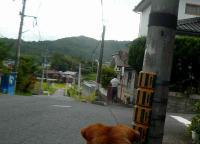 散歩20120828-5