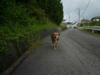 散歩20120829-2