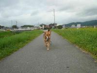 散歩20120829-5
