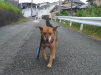 散歩20120830-1