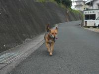 散歩20120830-2