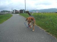 散歩20120830-4
