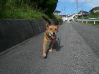散歩20120831-1