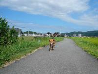 散歩20120831-2
