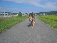 散歩20120831-3