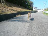 散歩20120923-2