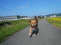 散歩20120923-3