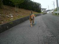 散歩20120924-1