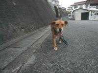 散歩20120924-2