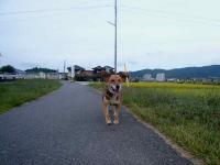 散歩20120924-3
