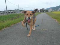 散歩20120924-4