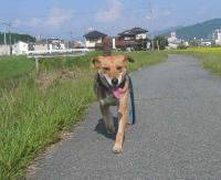 散歩20120925-3