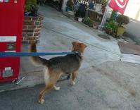 散歩20120925-4