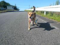 散歩20120926-1