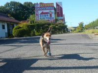 散歩20120926-2